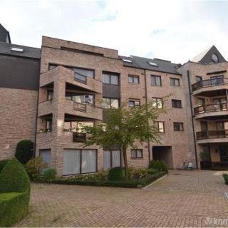 Appartement à louer à Turnhout