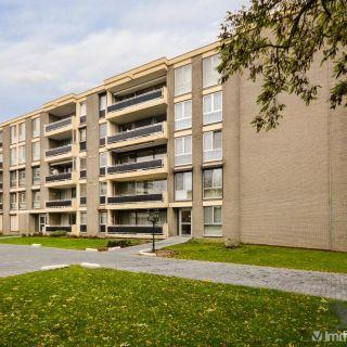 Appartement te koop tot Maaseik