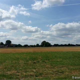 Terrain à bâtir à vendre à Kampenhout