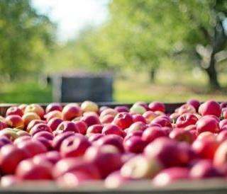 L'école communale de Modave est à la recherche de pommes