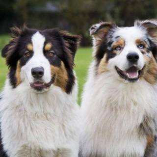 «Le Code wallon du bien-être animal: de quoi s'agit-il?»