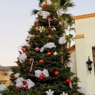 Retour des sapins de Noël dans les cités sociales