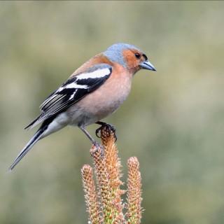 C'est reparti pour le recensement des oiseaux de jardins!