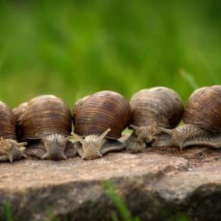Les escargots sous votre protection!