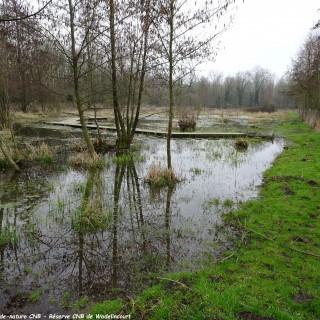 Wadelincourt protège sa réserve naturelle