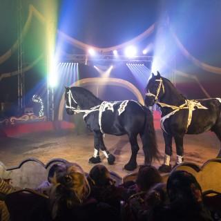 Le cirque Achille Zavatta présente «Surprise»