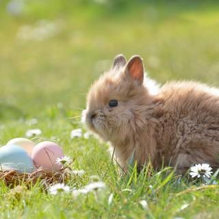 3 chasses aux œufs à ne pas manquer !