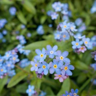 Quelles plantes pour votre terrasse ou votre jardin au printemps ?