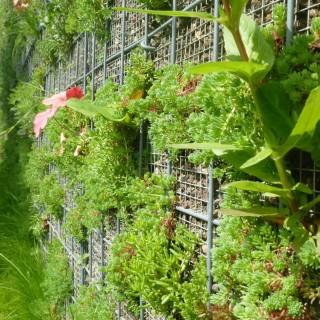Weemaes Gardens