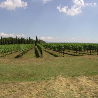 Vino & Verbo