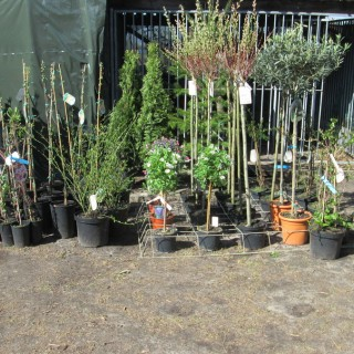 Jeva-plants