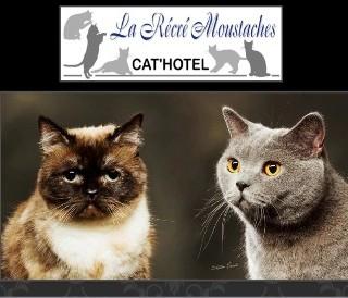 Cat'Hôtel