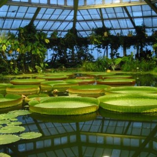 Jardin Botanique National de Belgique/Nationale plantentuin van België