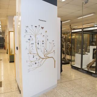 Muséum de Zoologie et d'Anthropologie de l'ULB